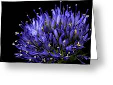 Chives Flower Greeting Card