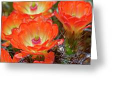 Claret Cup Cactus Flowers, Echinocereus Greeting Card