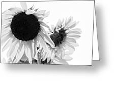 Classic Sunflowers Greeting Card
