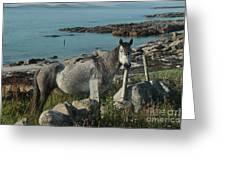 Cleggan Connemara Greeting Card