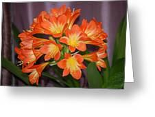 Clivia Blossoms Greeting Card