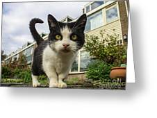Close Up Cat On The Street Greeting Card