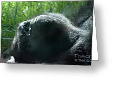 Close-up Of Frowning Adult Mountain Gorilla Greeting Card