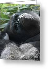 Close-up Shot Of Silverback Gorilla Making An Angry Face Greeting Card