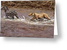 Closing In - Lion Chasing A Zebra Greeting Card by Alan M Hunt
