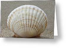 Cockle Shell 2015c Greeting Card