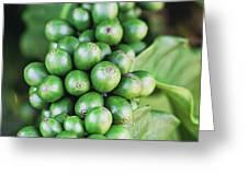 Coffee Berries Greeting Card