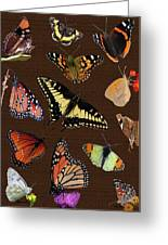 Collage Of Ca Butterflies Greeting Card