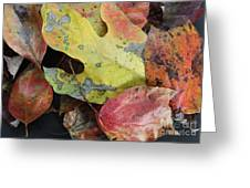 Collective Autumn Color Greeting Card