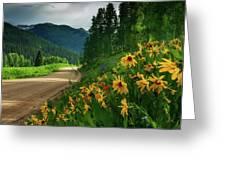 Colorado Wildflowers Greeting Card by John De Bord