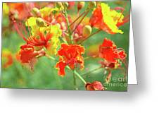 Colorful Morning Greeting Card