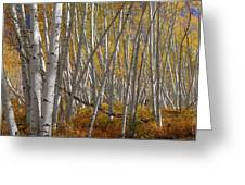 Colorful Stick Forest Greeting Card