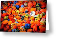 Colorful Tiny Pumpkins Greeting Card