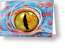 Colorful Tokes Gecko Amazing Eye Macro Greeting Card