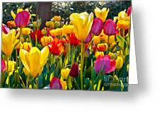 Colorful Tulips In The Park. Spring Greeting Card