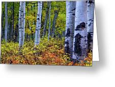Colors Of October Greeting Card by John De Bord