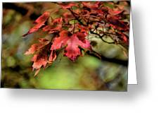 Colours Turning Greeting Card
