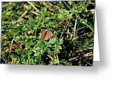 Common Buckeye Butterfly Greeting Card