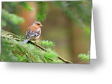 Common Chaffinch Fringilla Coelebs Greeting Card