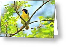 Common Yellowthroat Singing His Little Heart Out Greeting Card