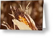 Corn In Dry Husk Greeting Card