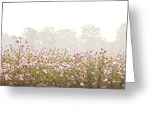 Cosmos Field Greeting Card