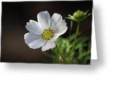 Cosmos In The Cottage Garden Greeting Card