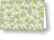 Cotton Seed Lilies Greeting Card