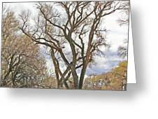 Cottonwood Az Bayou Leafless Tree Sky Clouds Path 31262019  Greeting Card