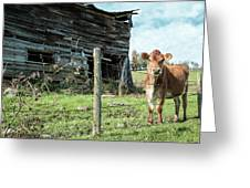 Cow By The Old Barn, Earlville Ny Greeting Card by Gary Heller