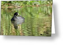 Crazy Coot Greeting Card