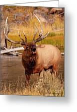 Creekside Bull Greeting Card