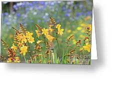 Crocosmia Buttercup Flowers Greeting Card