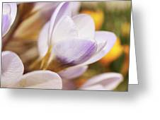 Crocus Greeting Card by Whitney Goodey