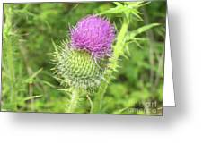 Crown Thistle Greeting Card