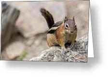 Curious Chipmunk Greeting Card