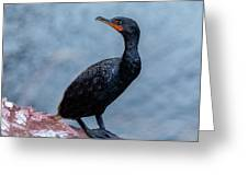 Curious Cormorant Greeting Card