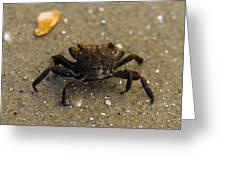 Curious Crab Greeting Card
