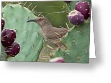 Curve-billed Thrasher, Cochise County Arizona Greeting Card