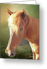 Cute Chestnut Pony Greeting Card