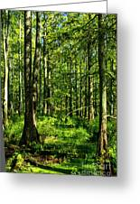 Cypress Trees Greeting Card