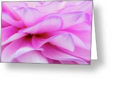 Dahlia 3 Greeting Card