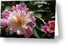 Dahlia Delight Greeting Card