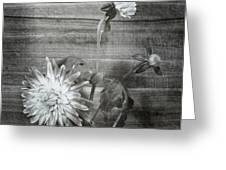 Dahlia Grouping Greeting Card