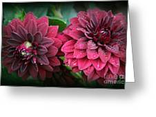Dahlias In Crimson Red Greeting Card
