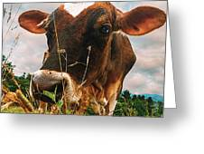 Dairy Cow Greeting Card