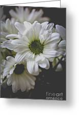Daisey Flowers 0981 Greeting Card