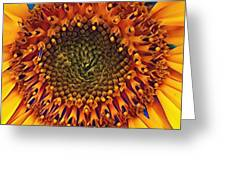 Daisy 22 Greeting Card by Cindy Greenstein