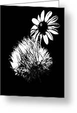 Daisy And Thistle Black And White Greeting Card