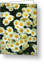 Daisy Crazy For You Greeting Card